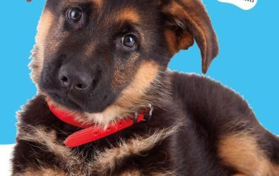 A Dog's Purpose: Ellie's Story